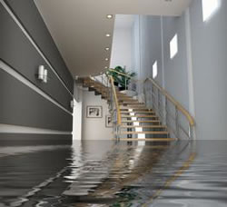 Water Damage Experts in West Palm Beach